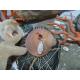 piercing corail rouge